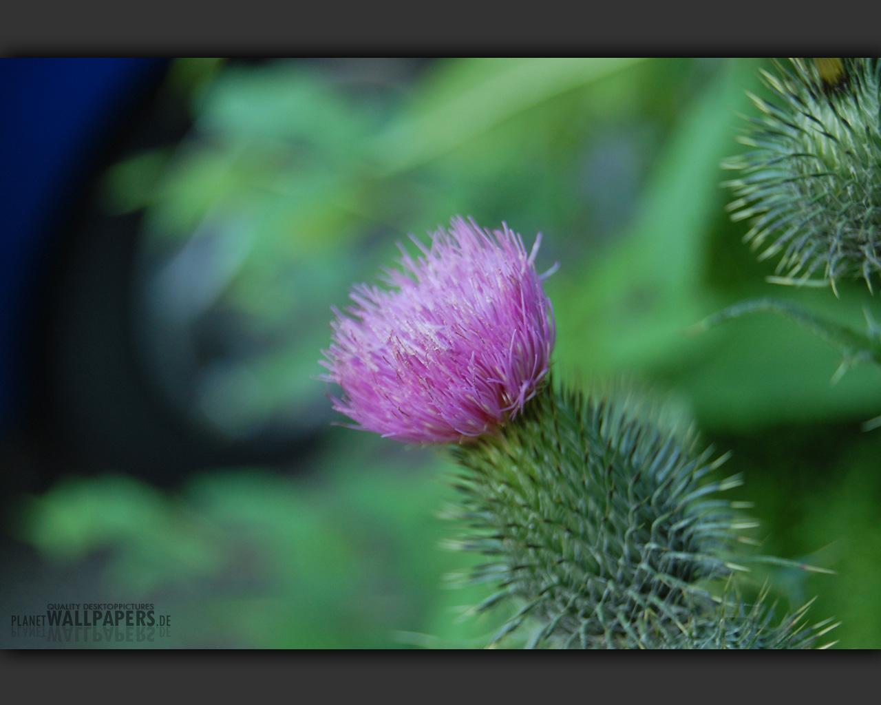 Blumen Desktop Bilder