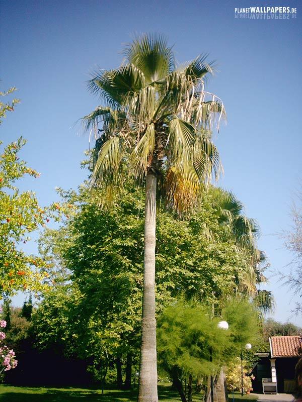 Zu allen bildern von strand und palmen
