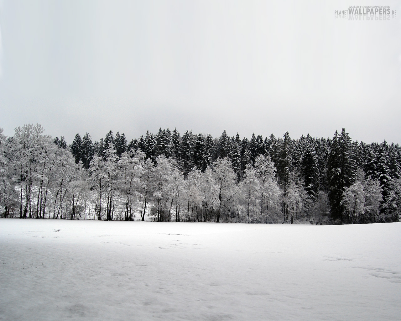 Winterlandschaften Desktop Bilder