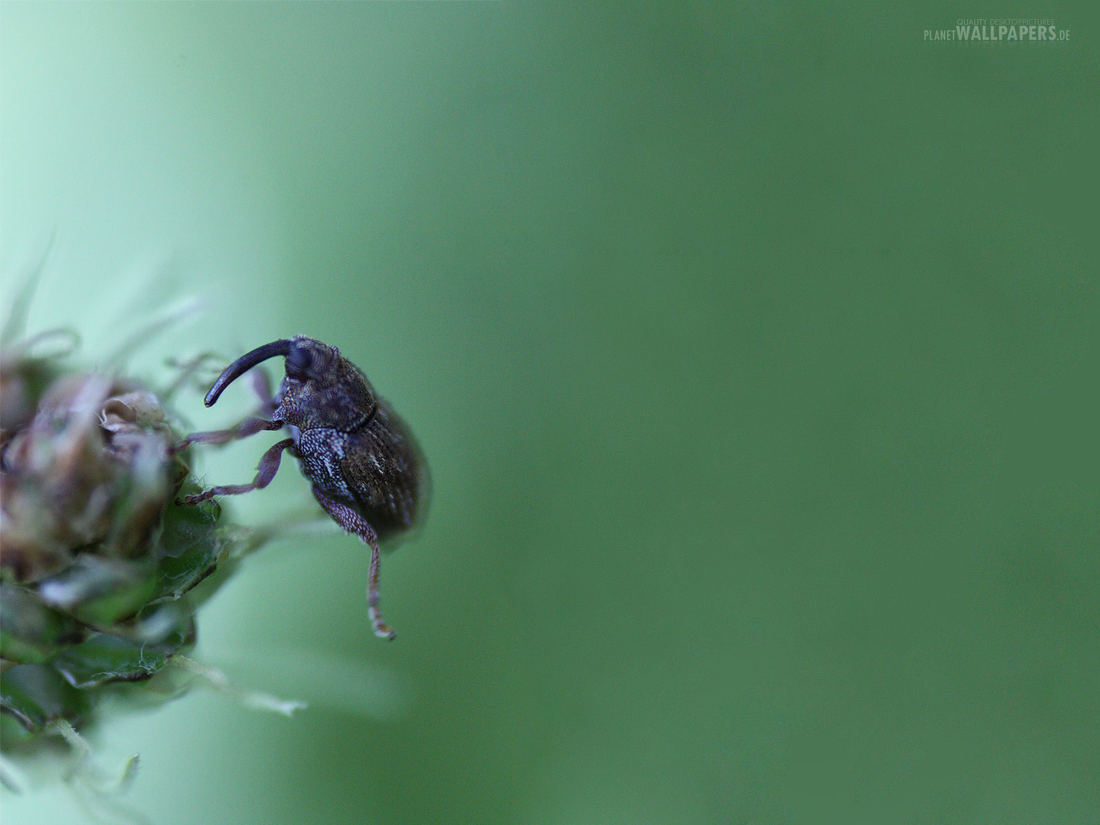 Zu allen bildern von: insekten