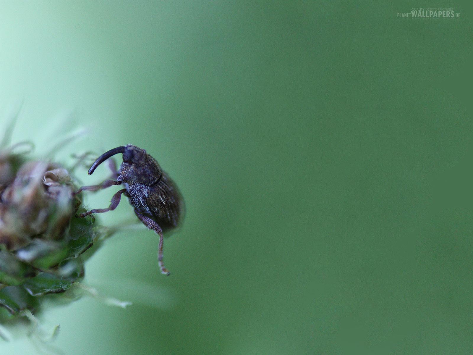 Insekten Desktop Bilder