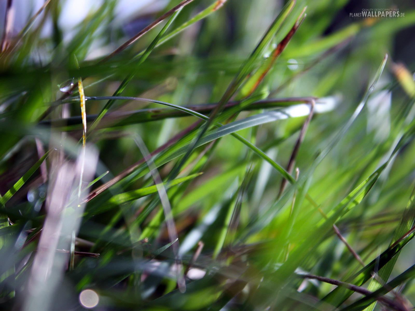 Pflanzen Desktop Bilder