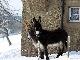Bilder von Esel